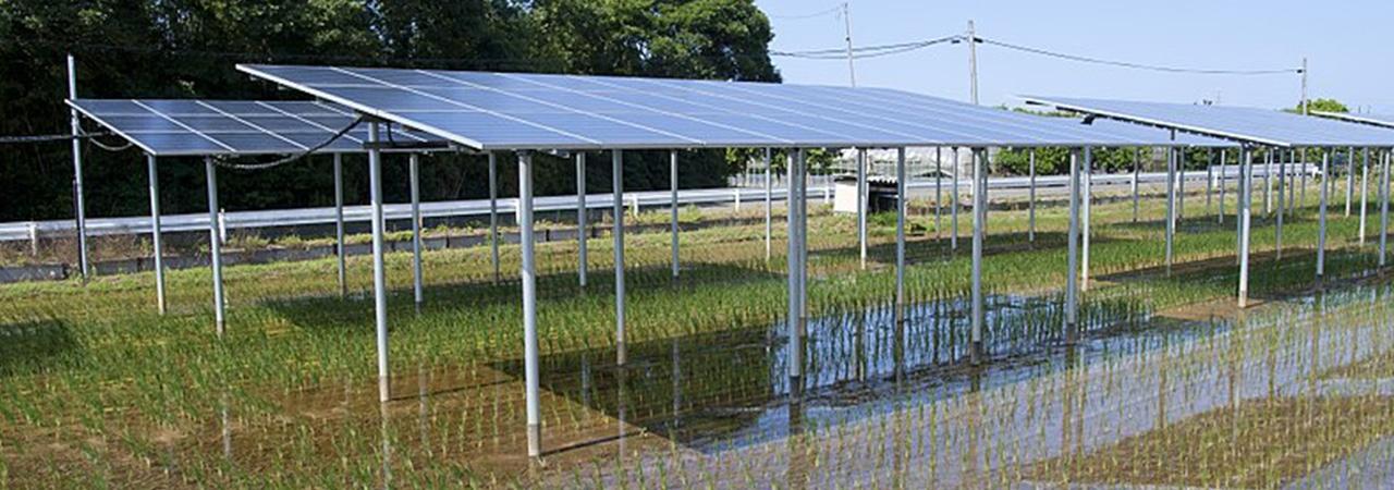 агробизнес и проекты солнечной электростанции